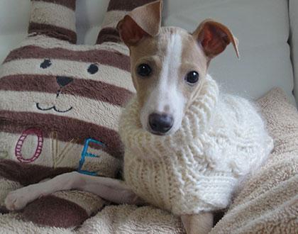 イタグレバピー服手編みのセーター