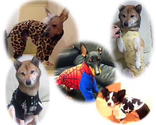 イタグレ以外の犬種の特注例