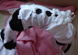 手作り犬の術後服