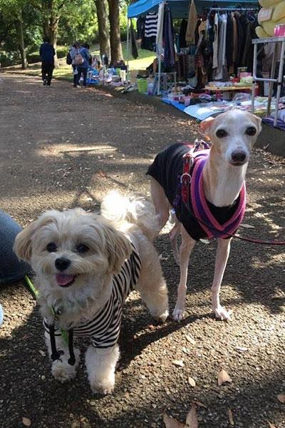 犬の保育園友達との再会