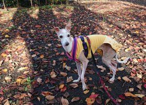 秋色の公園 秋色のイタグレ服で