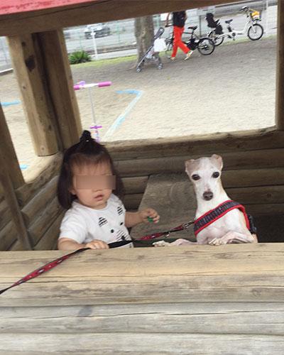 公園ログハウスでイタグレと女の子