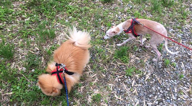 梅雨時の犬の保育園一時預かり