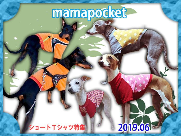 イタグレ服 ショートTシャツ特集