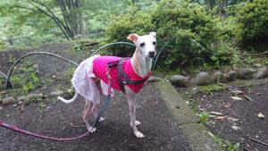 霧雨散歩 イタグレ スカート付き服で