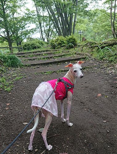 霧雨の公園散歩 イタグレ服 スカート付き