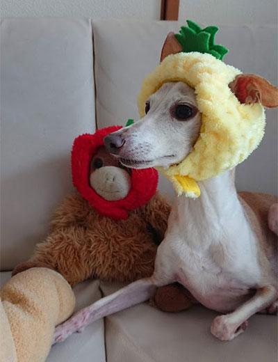 パイナップル被ったイタグレ