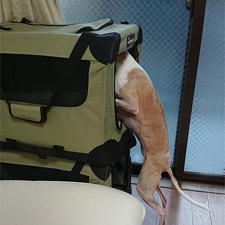 猫山さん救出作戦その3