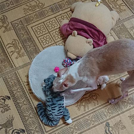 選ばれしオモチャの猫山さん