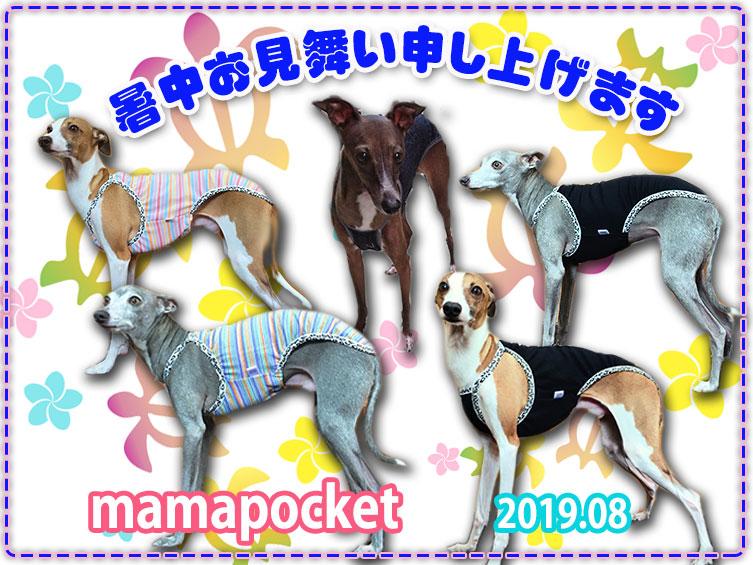 イタグレの夏服 2019 キャミソール