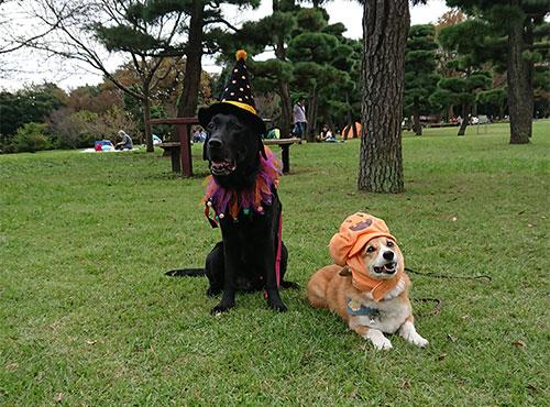 ハロウイン仮装の犬たち