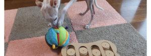 イタグレと知育玩具