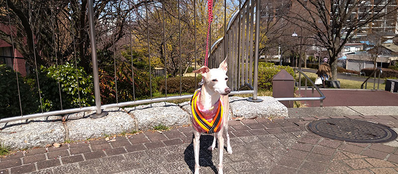 春先 ノースリーブトレーナーで公園散歩