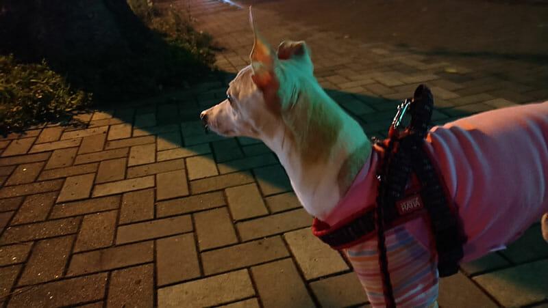 イタグレ 夜の散歩服