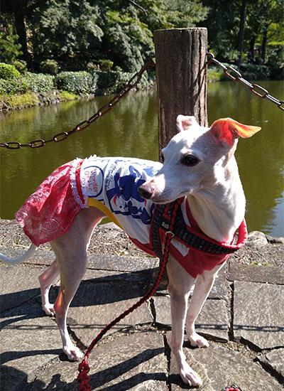 秋晴れの公園散歩