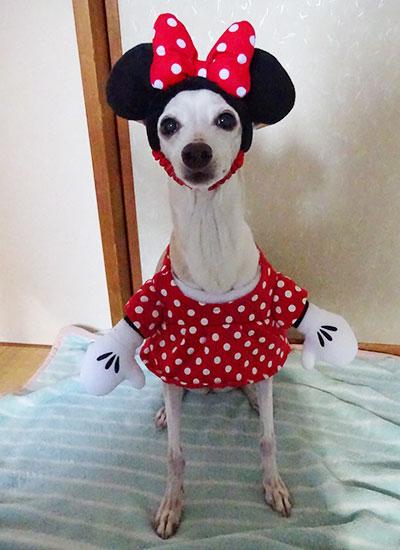 ミニーちゃん ディズニーランドSHOPの犬グッズ