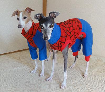 スパイダーマン イタグレ服2012年
