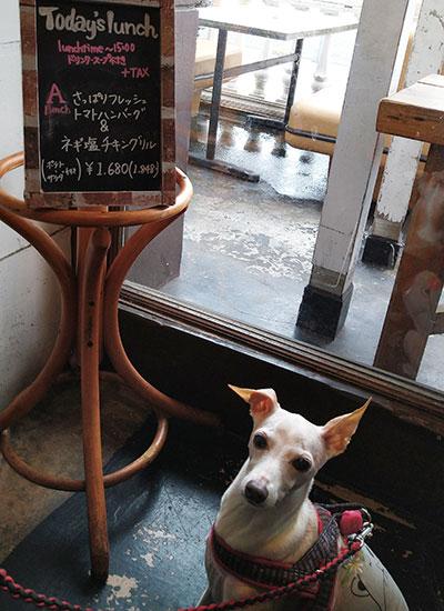 ドッグカフェでイタグレamica