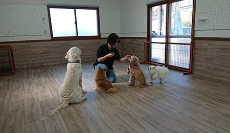 犬の保育園のトレーナー先生と