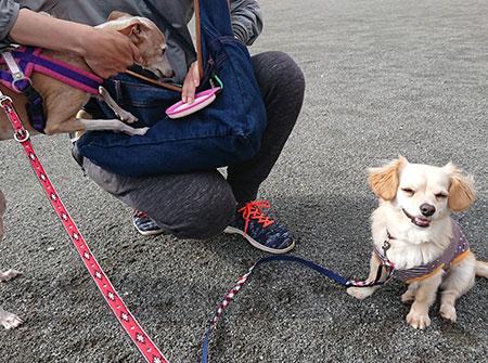 お散歩で偶然会えた犬友