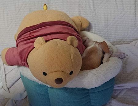 プーさん抱き枕を掛け布団に
