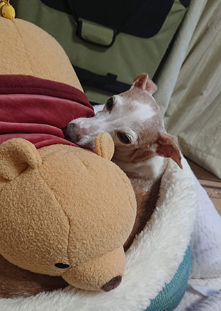 プー サンド 寝床
